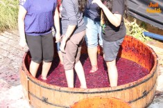 Grape Stomping Sulafest 2014 nashik