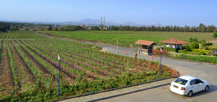 Panoramic View from Sula Vineyards