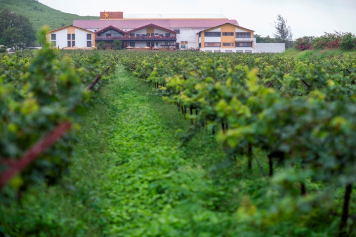 Sula Vineyards in the Monsoon