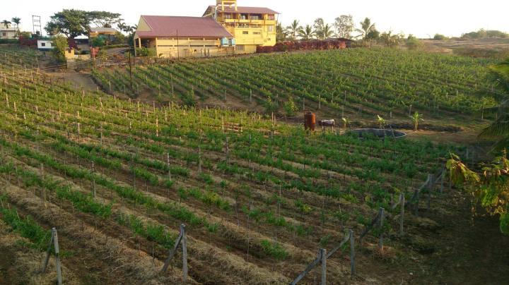 Vallone Vineyards Nashik