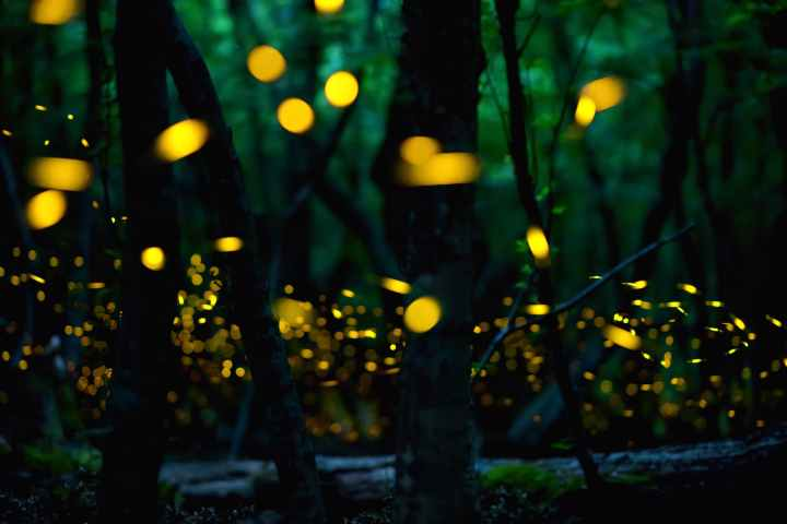 fireflies-nashik